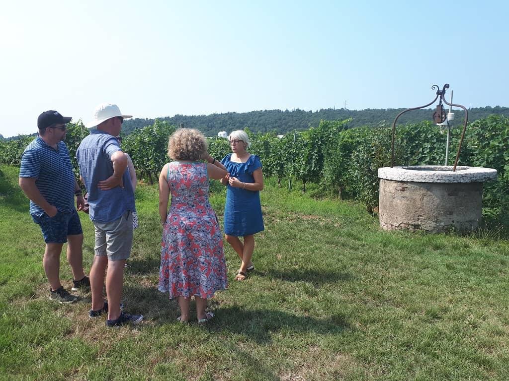 wine tour del Bardolino_vineyard