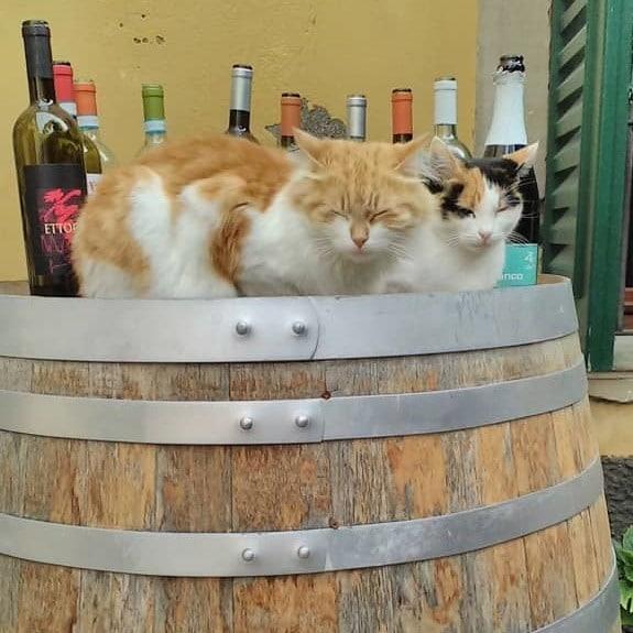 Lazy cats in Garda Lake town