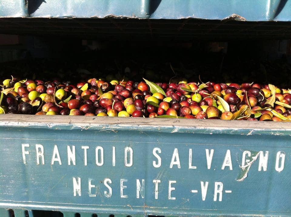 Bike tour olives