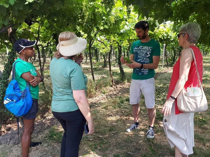 soave wine tour_vineyard