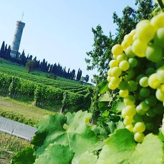 Wine tour del Lugana_Turbiana