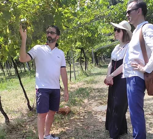 Amarone tour in the vineyard