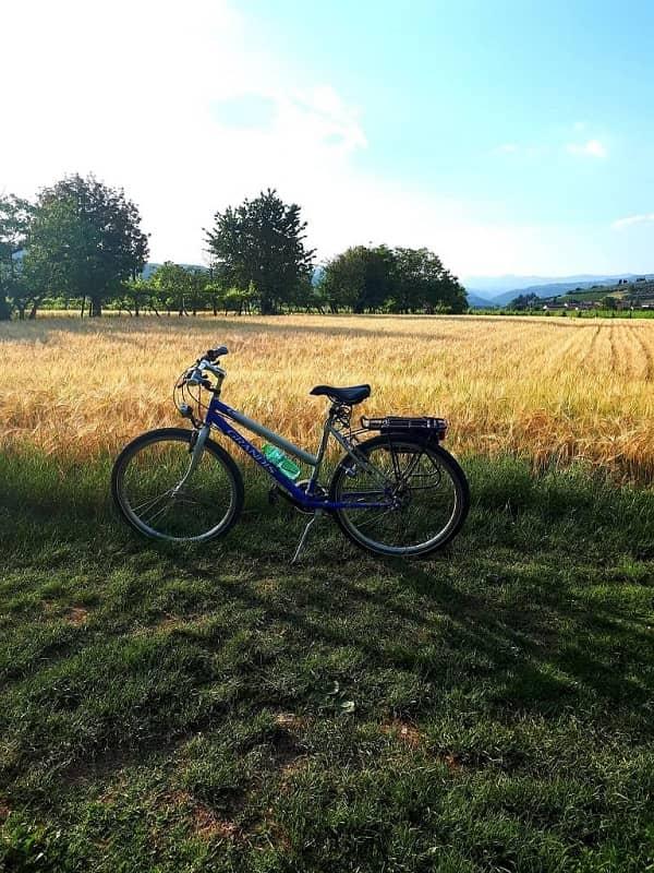 Bici tour dell'Amarone_grano