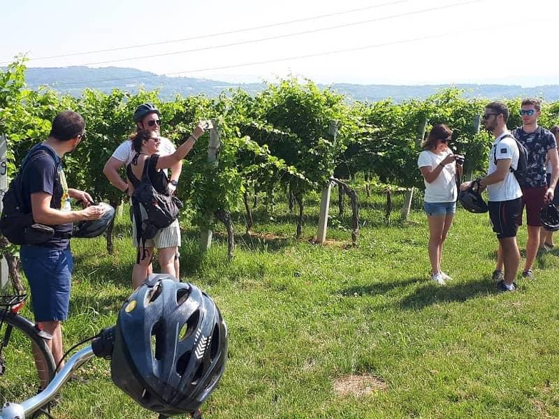 Bike tour Valpolicella vineyard