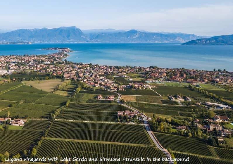Lugana vineyards